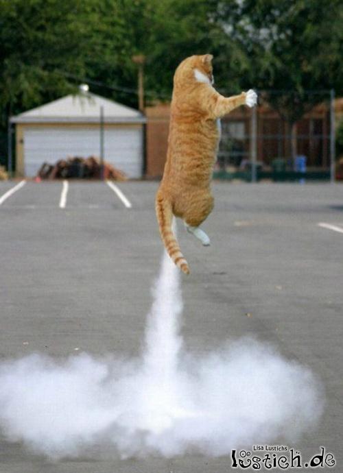 20320-raketenkatze.jpg