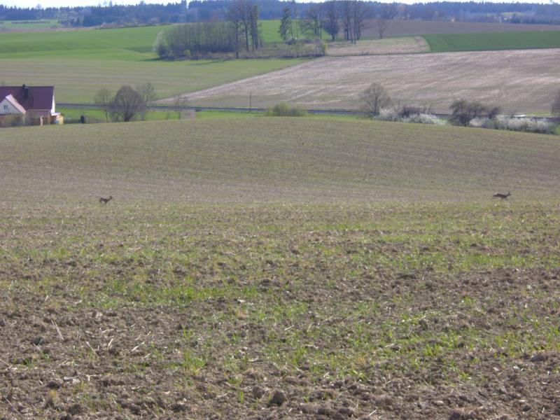 altomuenster-aichach-19.4.12-006.jpg