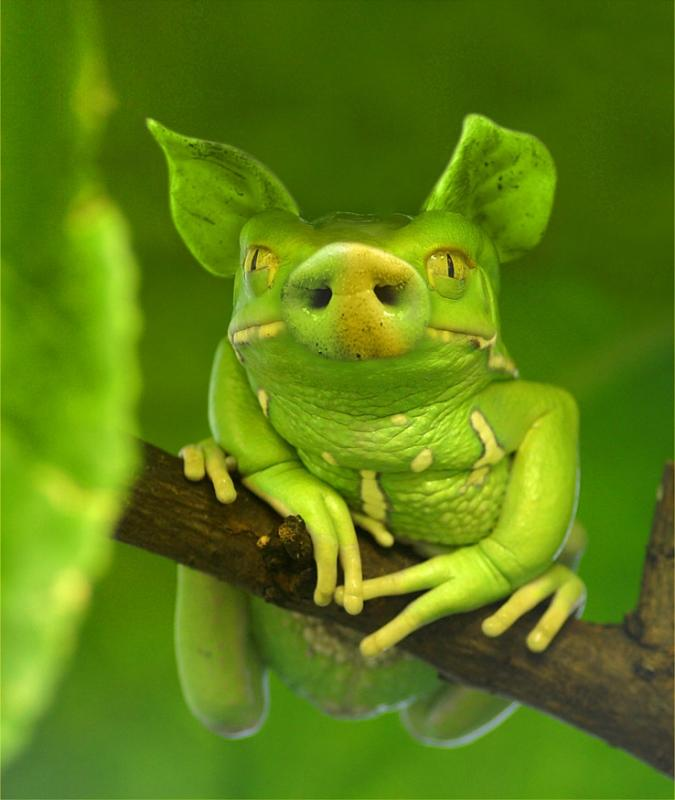 besonderer-frosch.jpg