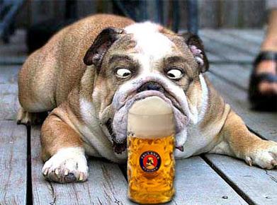 bierhund.jpg