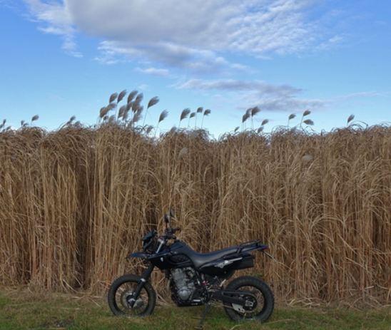 Klicke auf die Grafik für eine größere Ansicht  Name:bike.JPG Hits:577 Größe:52,2 KB ID:148366