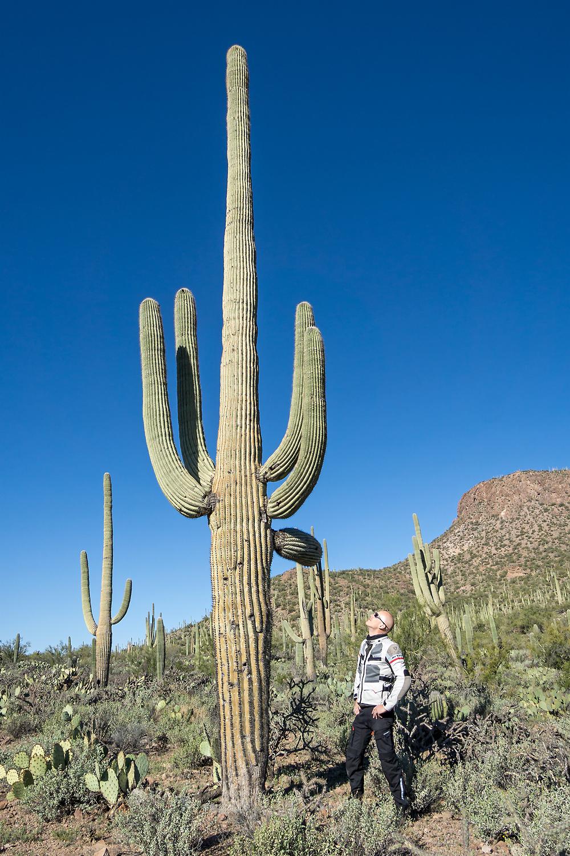 bj-rn-neben-saguaro.jpg