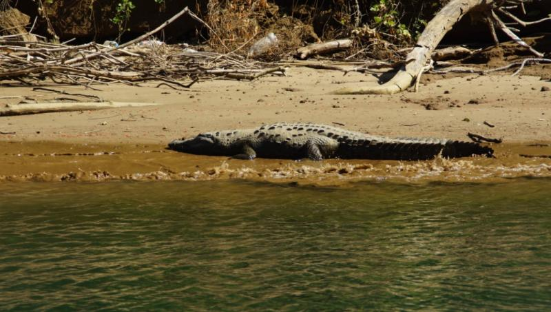 Klicke auf die Grafik f�r eine gr��ere Ansicht  Name:Chiapas 13 (111).jpg Hits:305 Gr��e:70,8 KB ID:89604