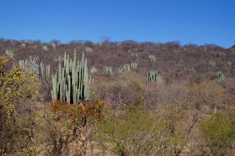 Klicke auf die Grafik f�r eine gr��ere Ansicht  Name:Chiapas 13 (163).jpg Hits:262 Gr��e:72,4 KB ID:89936