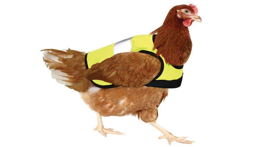 chicken-vest.jpg