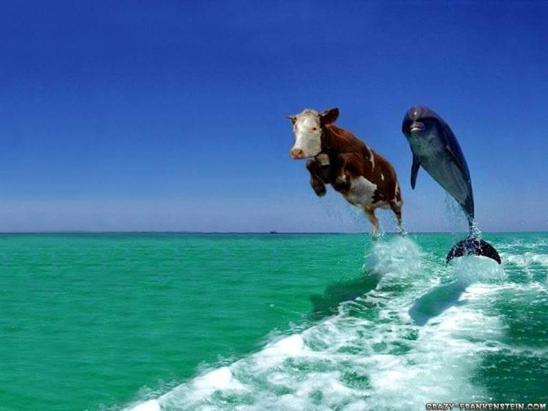 delphin-kuh.jpg