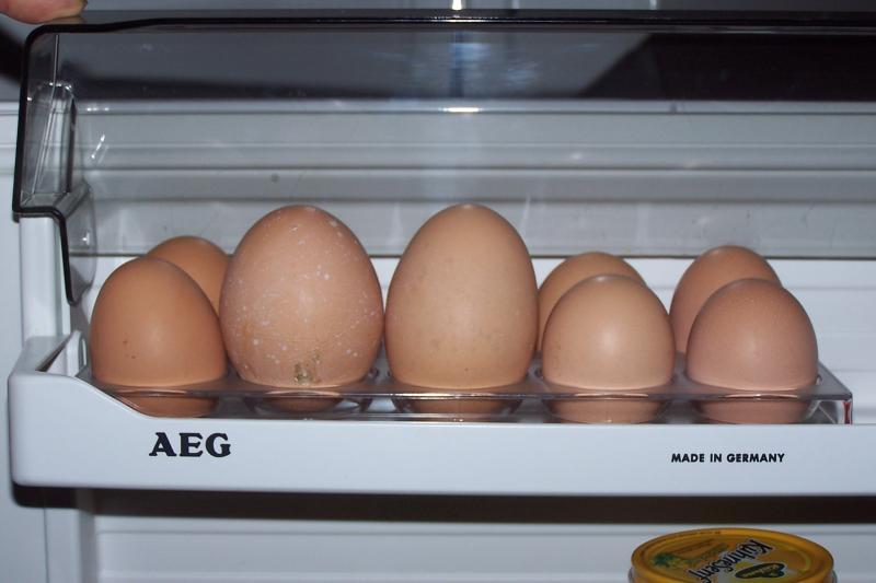 dicke-eier1.jpg