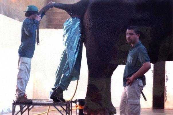 elefantenjob.jpg