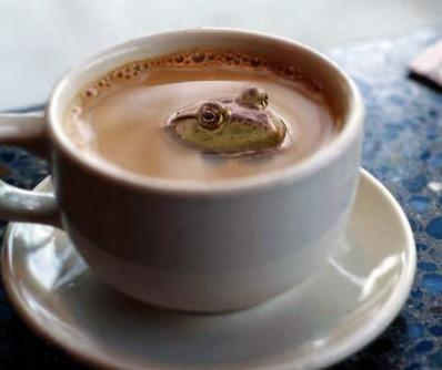 frosch-kaffee.jpg