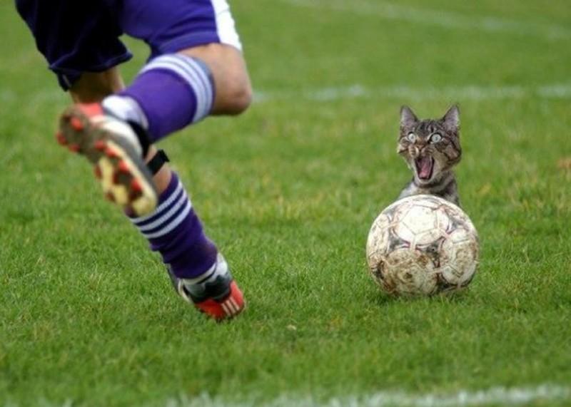 fussballkatze.jpg