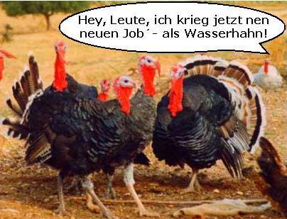 hahn-neuer-job-als-wasserhahn.jpg