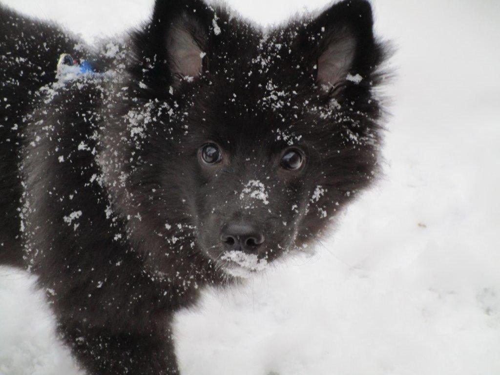 hund-013.jpg