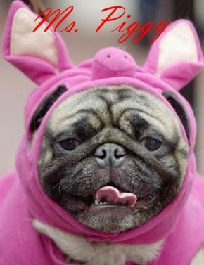hund-miss-piggy-1.jpg