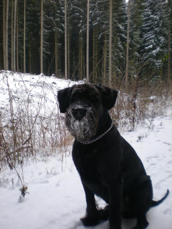hund-und-herr-004.jpg
