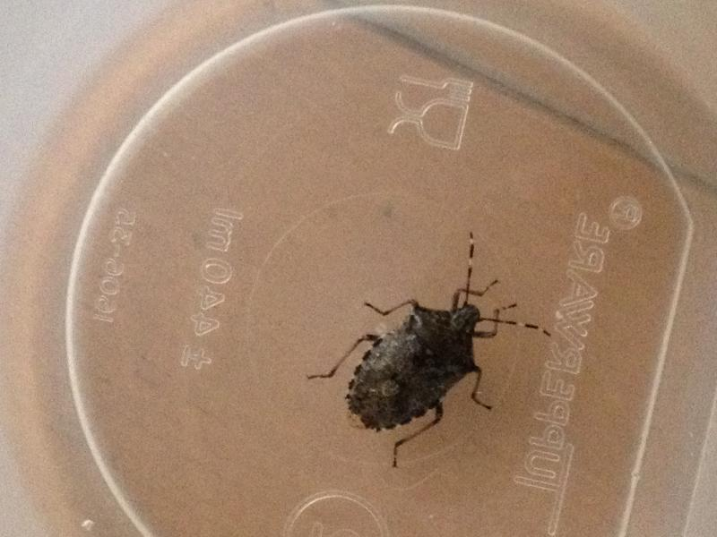 insekt.jpg