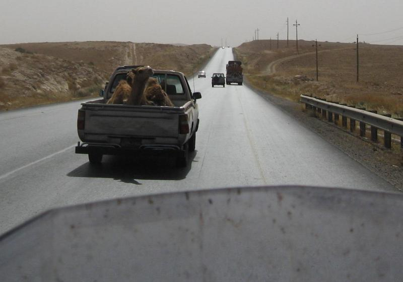 kamele-1.jpg