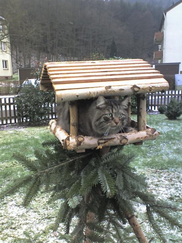 marius-vogelhaus.jpg