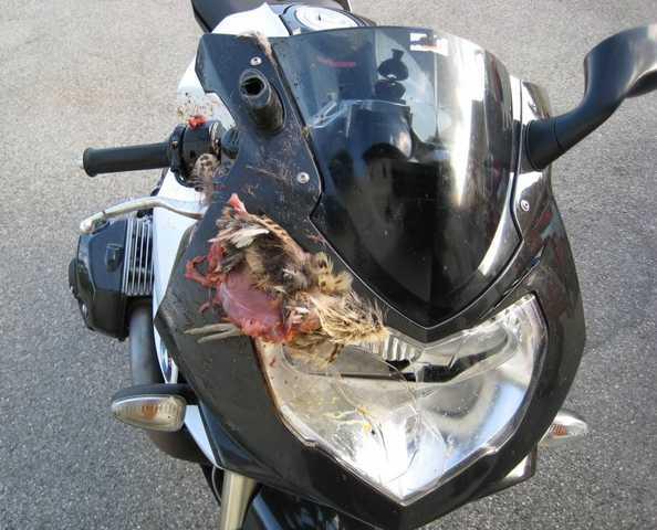 moped_front.jpg