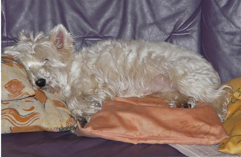 pepi-auf-sofa2-large-.jpg