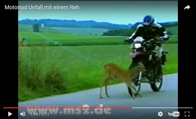 p-h-reh_kaputt.png
