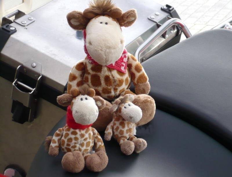 q_giraffen.jpg