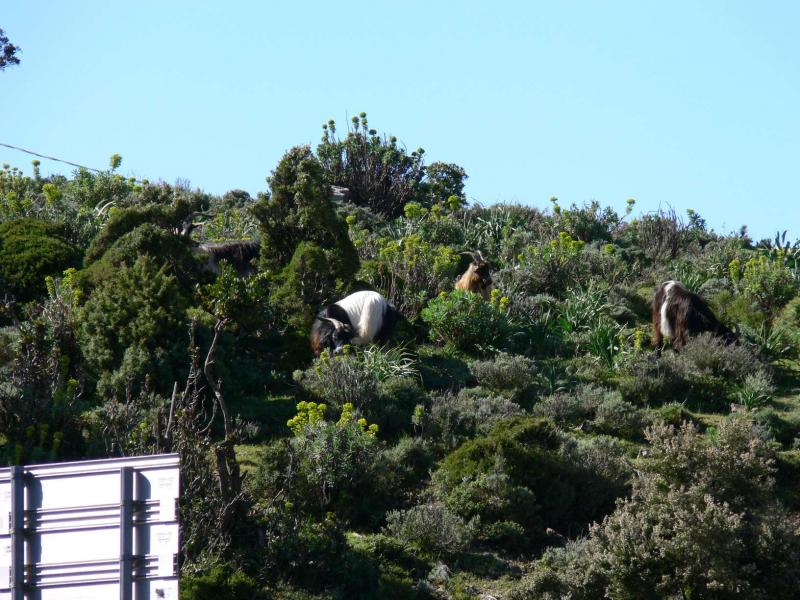 sardinien-april-mai-2012-070.jpg