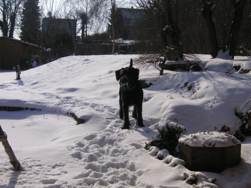 schneebilder-2006-112.jpg