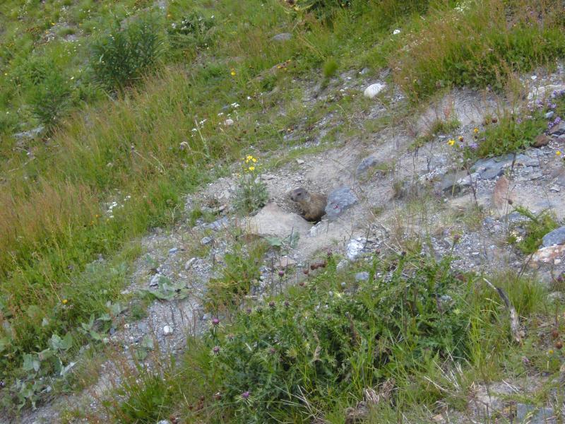 Klicke auf die Grafik für eine größere Ansicht  Name:Slowenien Dolomiten Tour 22.07-25.07.2013 121.jpg Hits:499 Größe:116,7 KB ID:103690