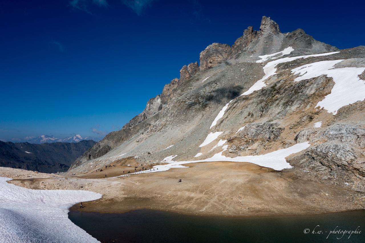 stella-alpina-84-von-165-.jpg