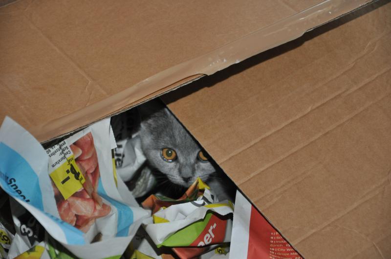 suela-21.-25.01.2012-020.jpg