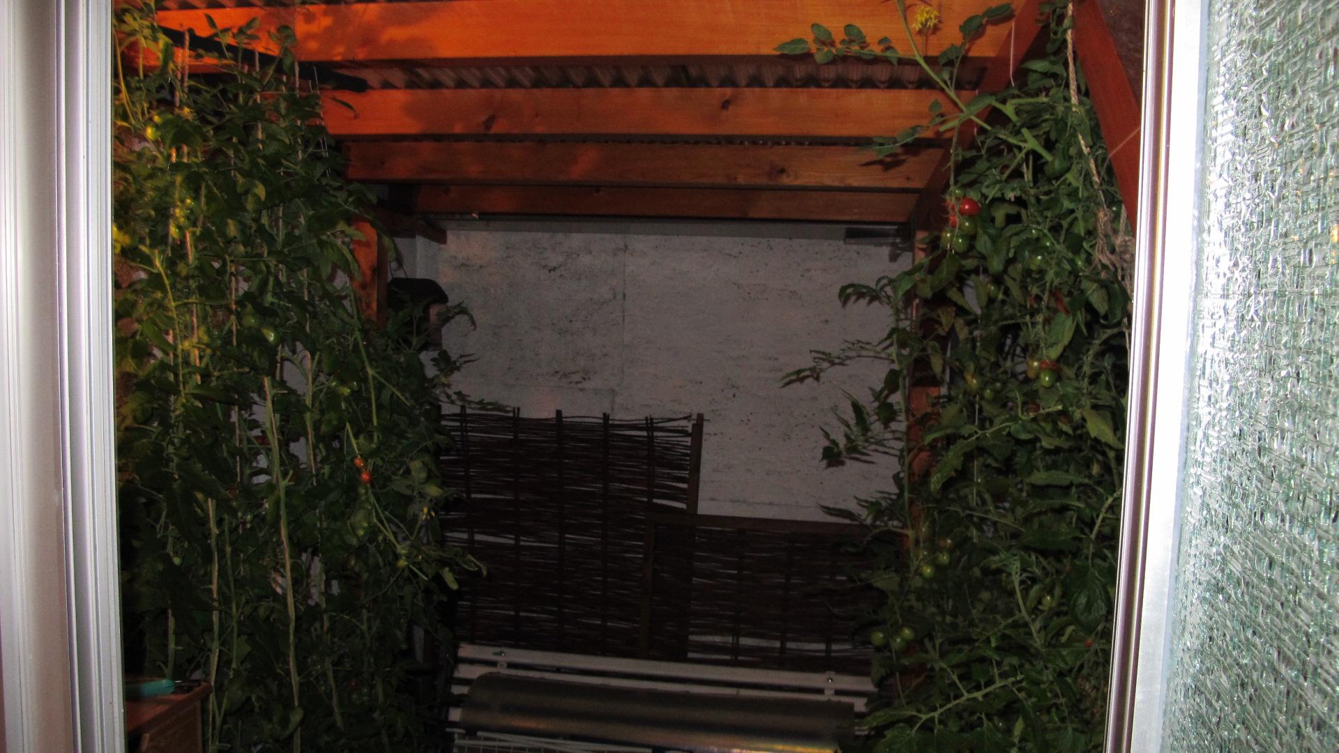 tomaten-004.jpg