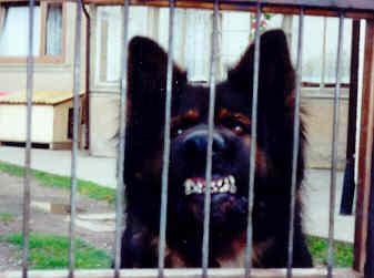 wallpdog.jpg