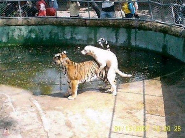 zoobesuch-mit-hund.jpg